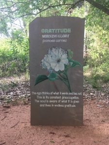 Gratitude - a guiding principle of Auroville