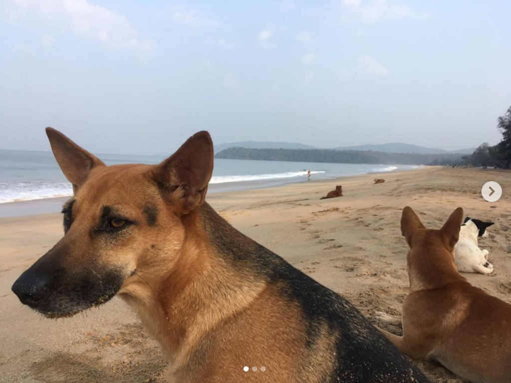 Beach dogs of Agonda, Goa