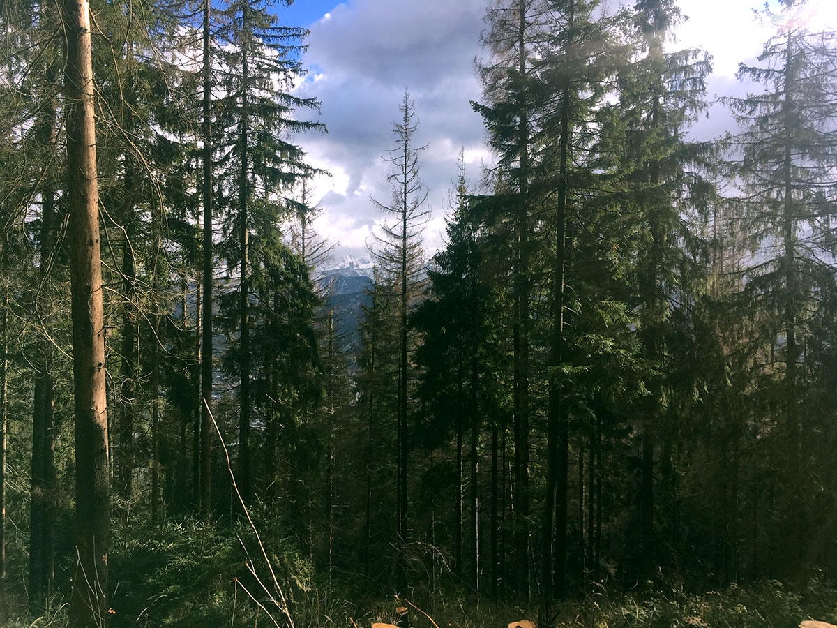 A forest on a mountain in Zakopane